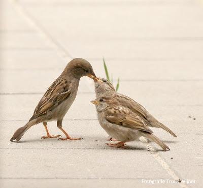 jonge musjes krijgen eten