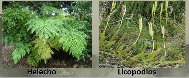 Jardines p blicos verticales proyecto sustentable for Jardines verticales introduccion