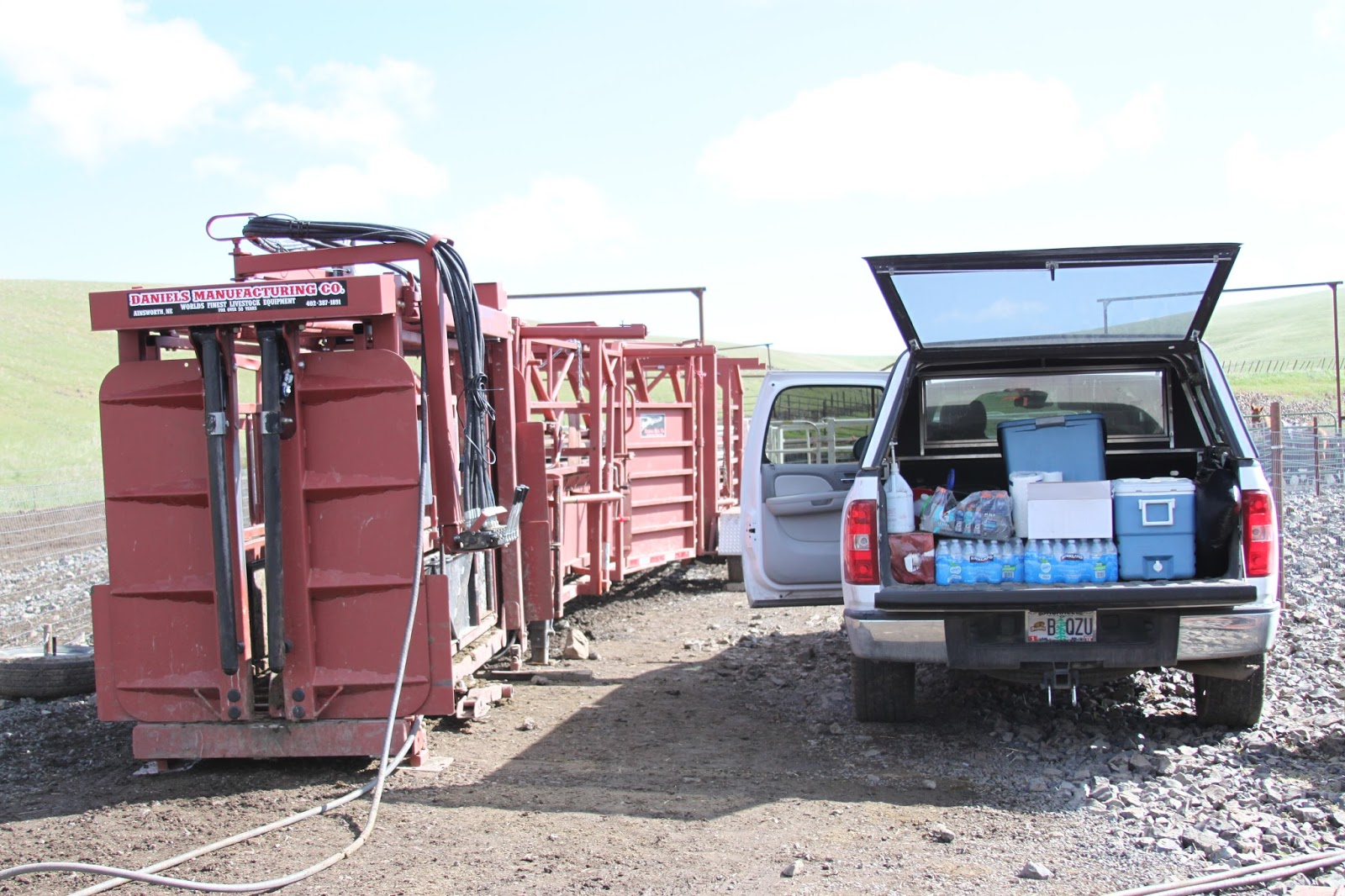 Breeding Box For Cattle Will Breed The Cattle
