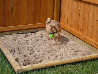 dog-digging-sandbox