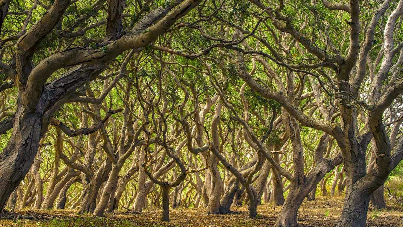 Oak trees in Palo Corona Regional Park, Carmel Valley, California (© Doug Steakley/Getty Images) 251