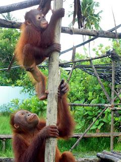 Sindi looks on as Rahayu climbs to the top