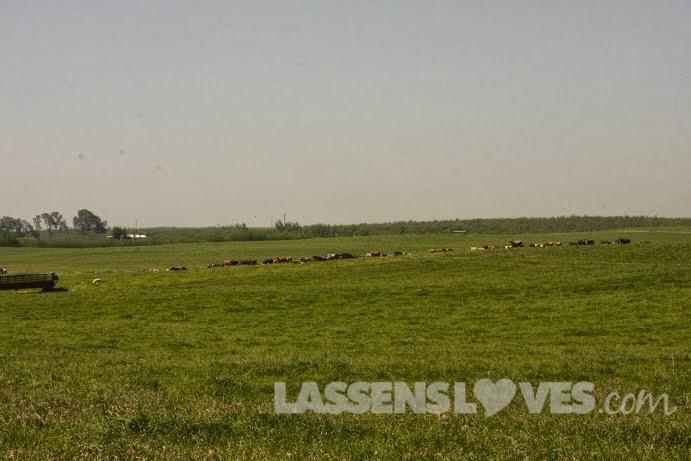 lassensloves.com, Lassen's, Lassens, Burroughs+Family+Farm