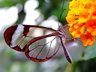 7 Fakta Menarik Tentang Kupu-kupu [ www.BlogApaAja.com ]