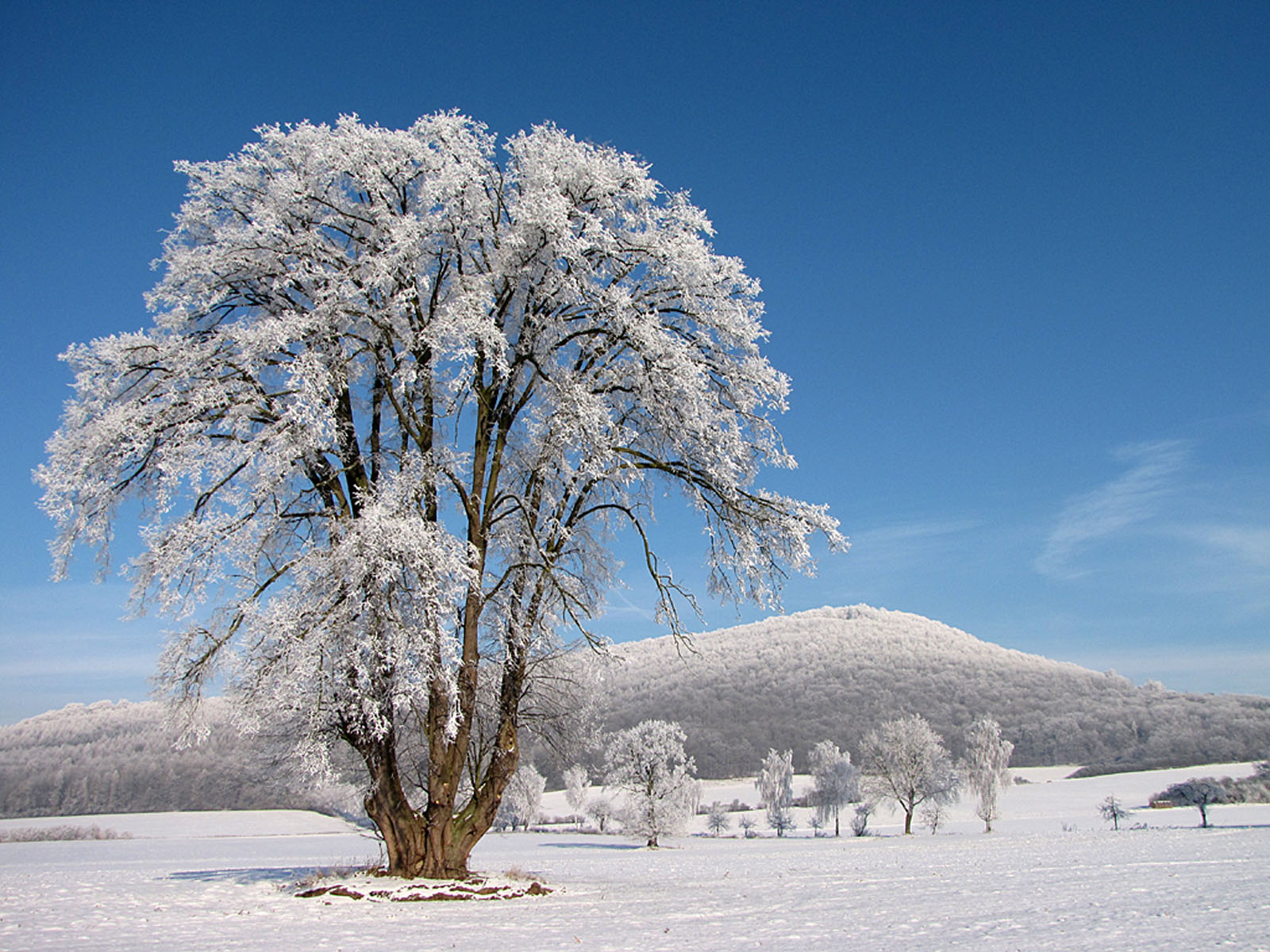 frozen trees widescreen wallpaper - photo #8