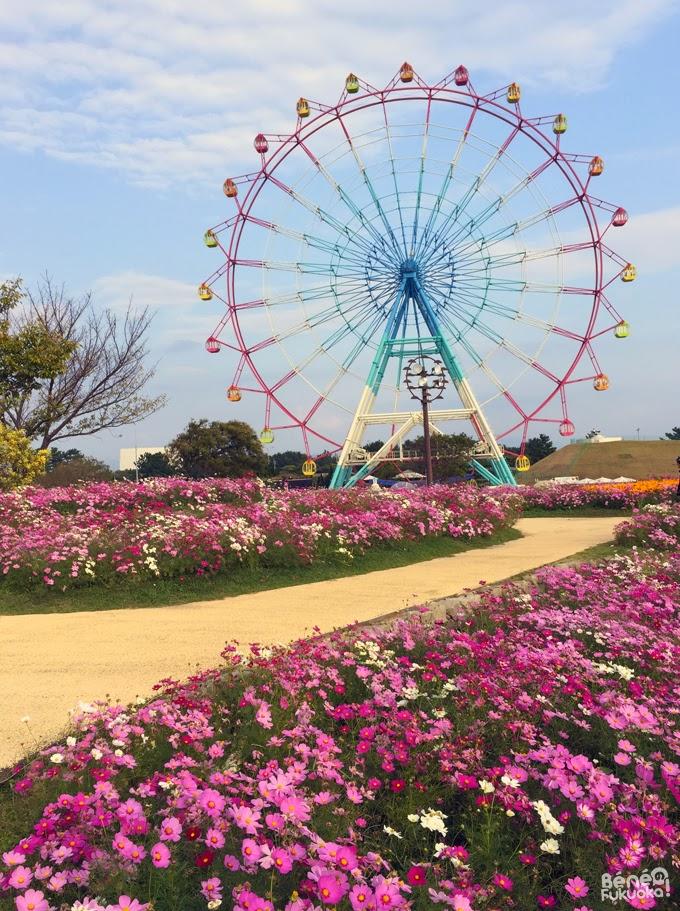 grande roue Umi no naka-michi - Fukuoka