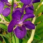 Orchids_Gardening