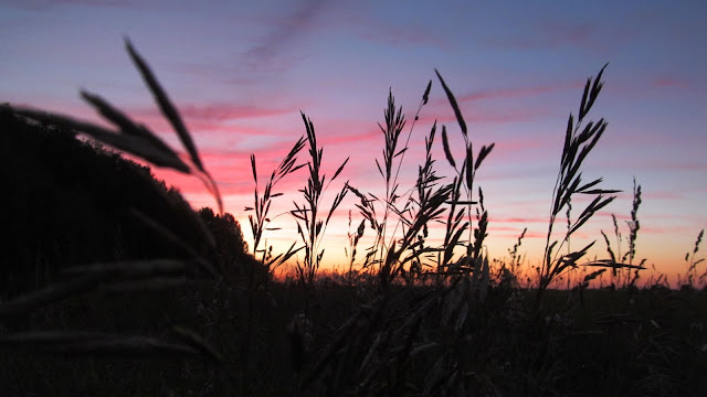 поле на закате