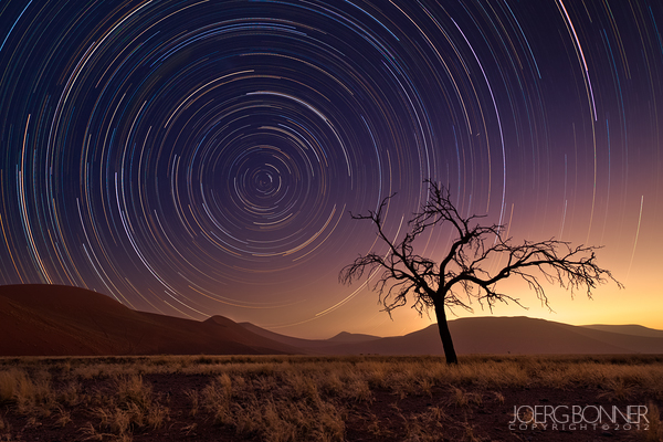 Startrails and a dead tree in the namibian desert