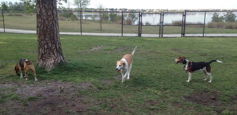 Dr. Phillips Park is small, but the other dog owners are friendly. I ...