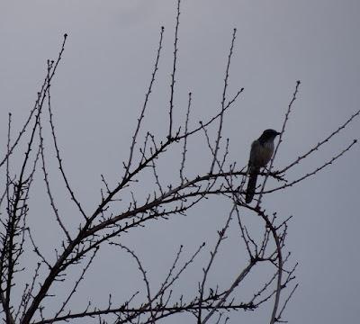 Bird in Tree Enjoying the Rain, © B. Radisavljevic