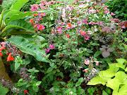 Cập nhật hình ảnh hoa cỏ TSV