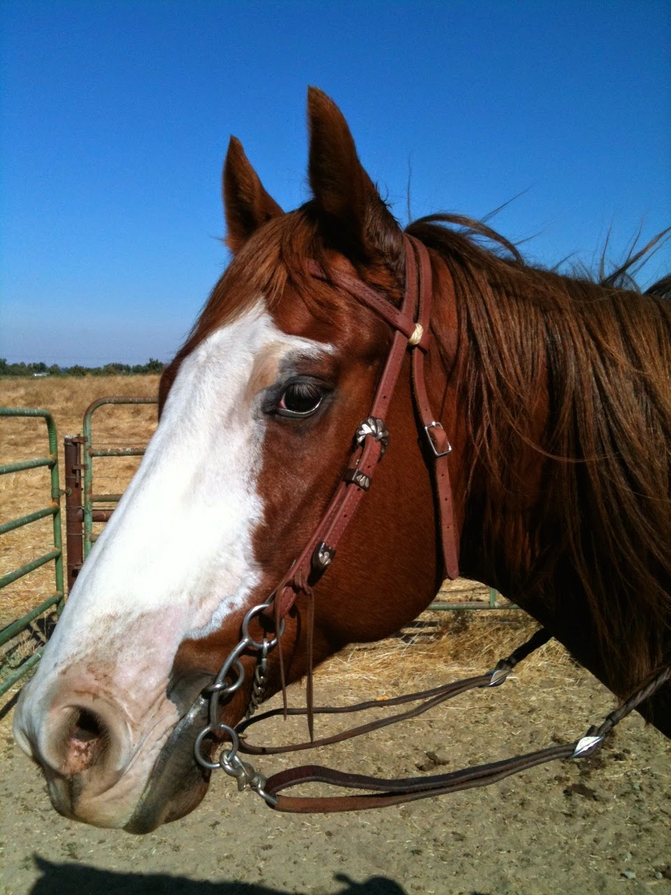 Headstalls For Large Horses Large Horse Leather Horse Tack