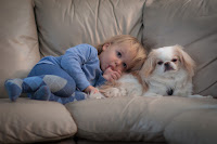 dogs provide constant source of companionship and comfort in babies