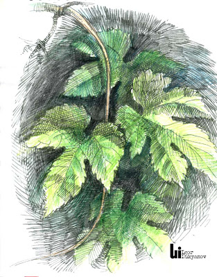 dessin de nature (feuilles)