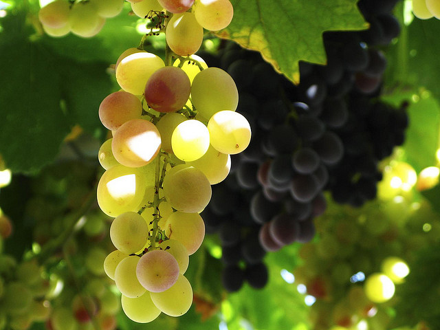 Cretan wine (grapes ripen in Crete) - Heraklion, Crete |Travel Greece Guide