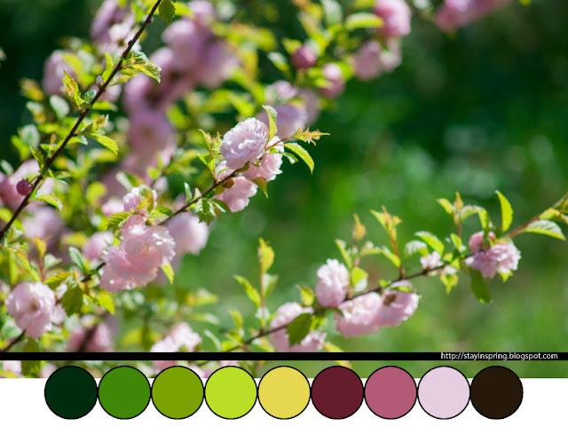 Colour palette sakura