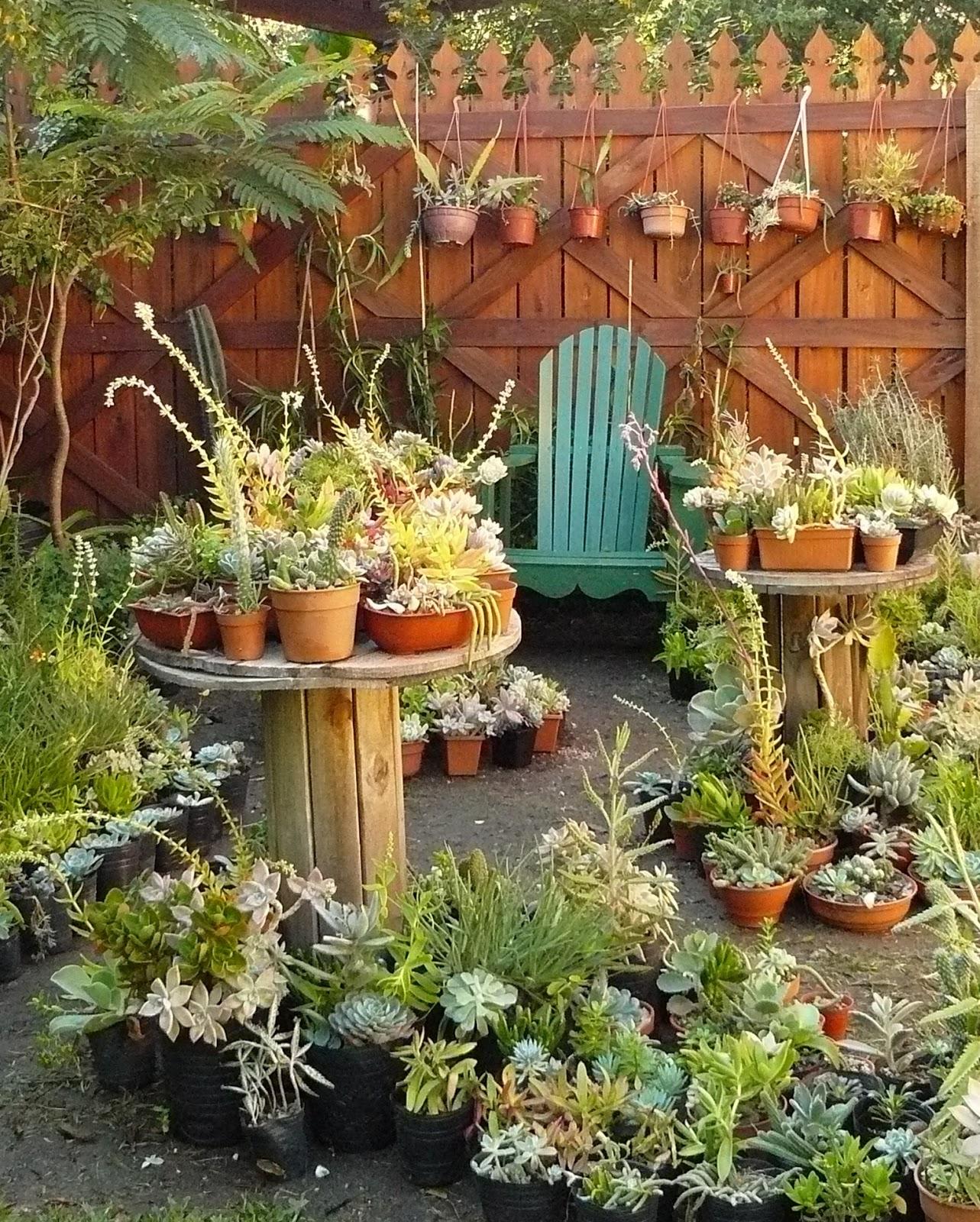 Jardines de cactus y suculentas abril 2013 for Jardines con cactus