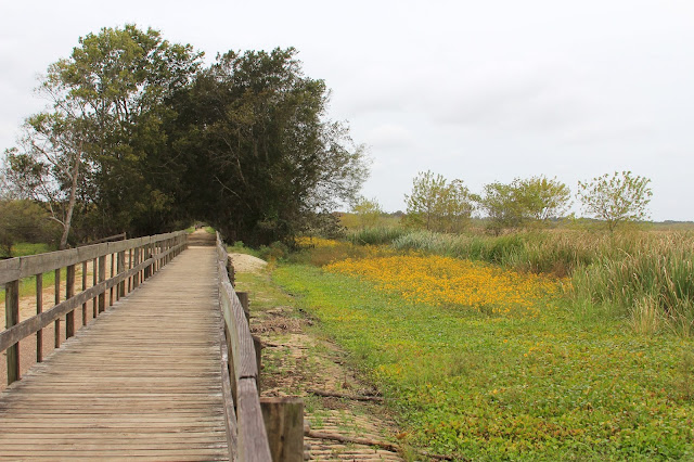 Out of the Woods-Spilway Trail-Brazos Bend State Park-Needville, Texas