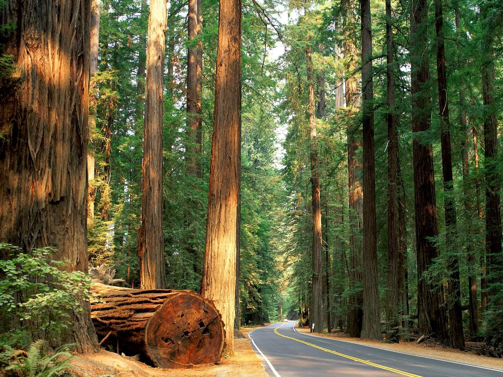 4k wallpaper nature redwoods - photo #40