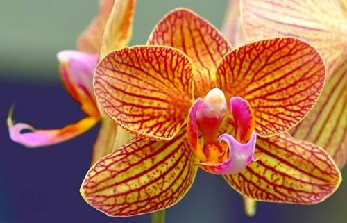 flores exoticas orquideas