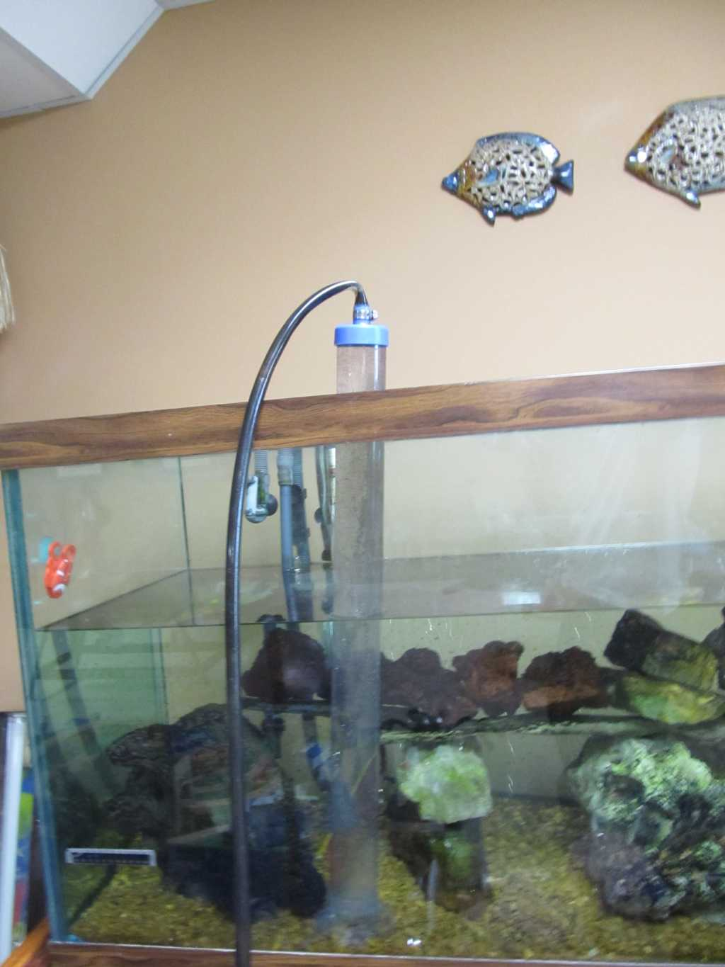 101 things never to do to your house june 2012 for Fish tank siphon