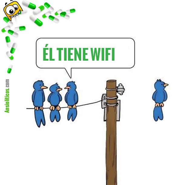 Chiste de Animales: Pajaros WIFI sin cables