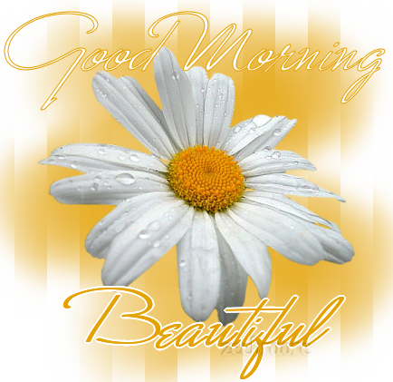 all very beautiful and amazing wallpapers of good morning beautiful