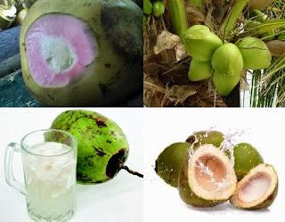 manfaat khasiat kelapa hijau