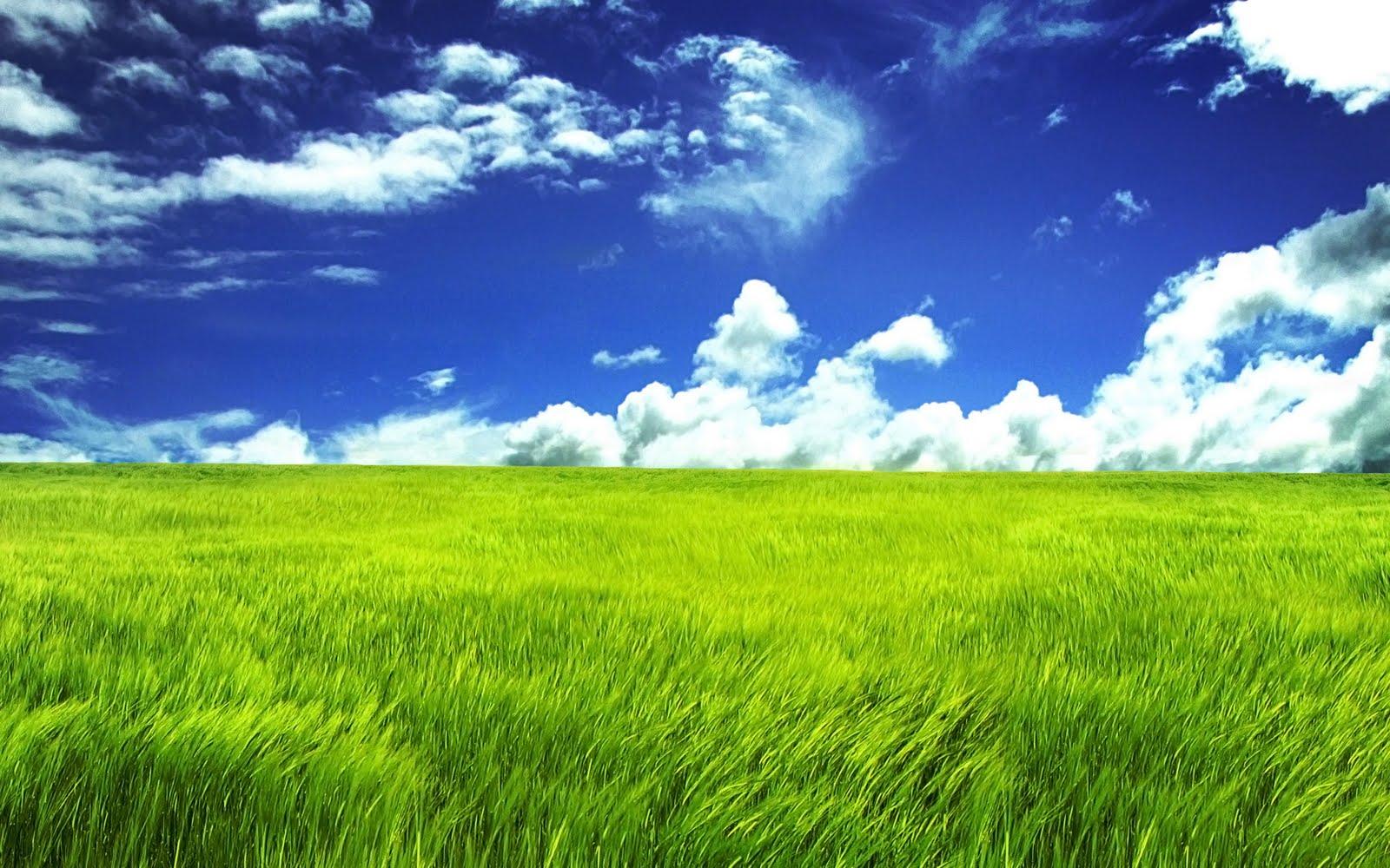 http://1.bp.blogspot.com/-bQL-RXzhWiM/TmD3_rYAkFI/AAAAAAAAANM/HMZ3b2ZHlds/s1600/nature%2Bwide.jpg