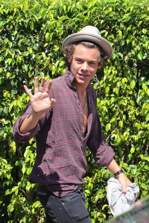 Harry Style VML