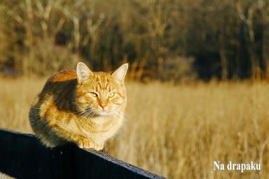 O znakowaniu rewiru u kotów – fakty i mity