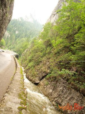 Apa pe marginea drumului