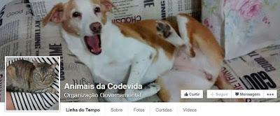 Codevida também mantém página com informações atualizadas sobre os animais abandonados