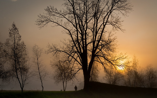Niebla Puesta de Sol Paisajes Naturales