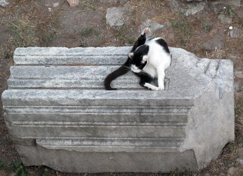 feral stray cat shelter rome ruins italy