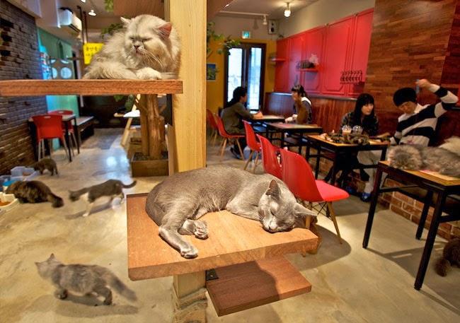 Kedi Kafeleri Japonya