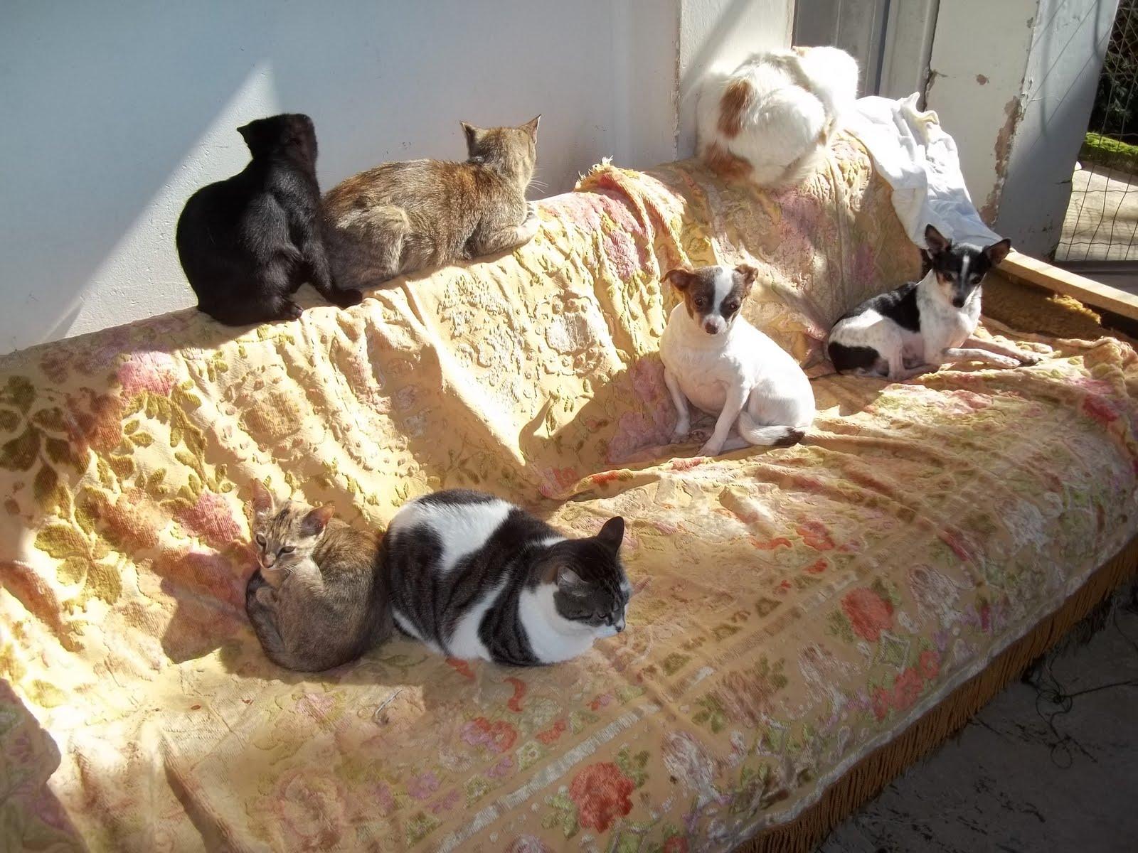 Panos e Pets da Beth: Hauskatzen Vitinho um pouco de liberdade #977534 1600x1200