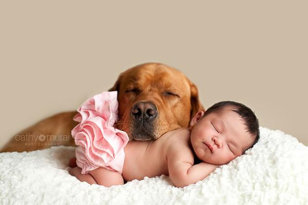 Chú chó gối mình lên bé cùng ngủ