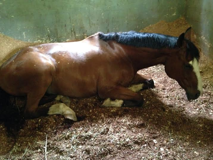 2015 - Kiddo could not be more relaxed in his new home...