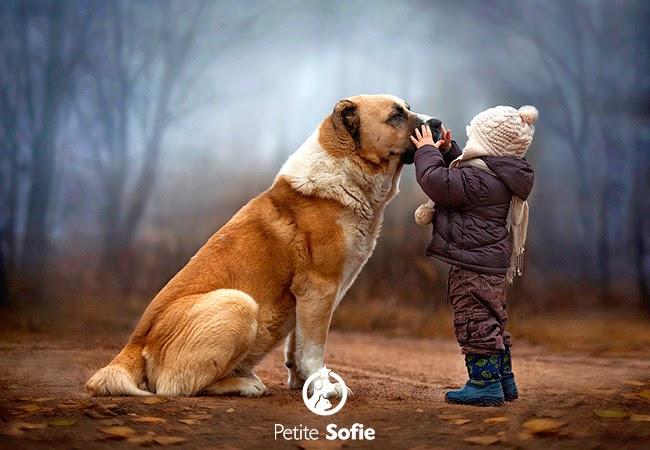 Estudo revela como cães se sentem