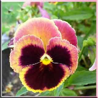 cilt bakımı    cilt bakım mor menekşe    menekşe bakımı    menekşe çiçeği    menekşe gözler     menekşe resimleri    menekşe gül    hercai menekşe   cilt lekeleri    cilt maskesi    cilt kanseri    cilt    maskeleri    cilt hastalıkları    cilt bakım ürünleri    sivilce