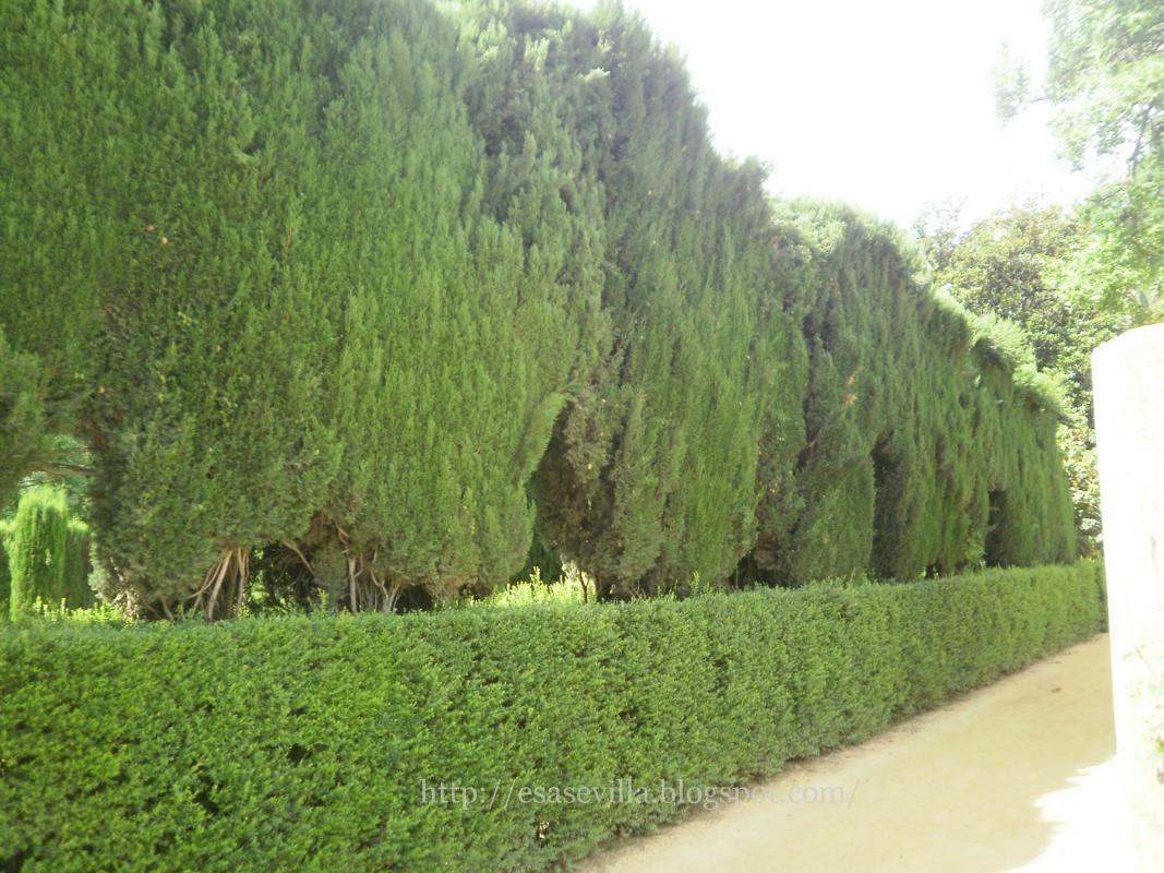 Esa sevilla jard n del laberinto for Jardin laberinto