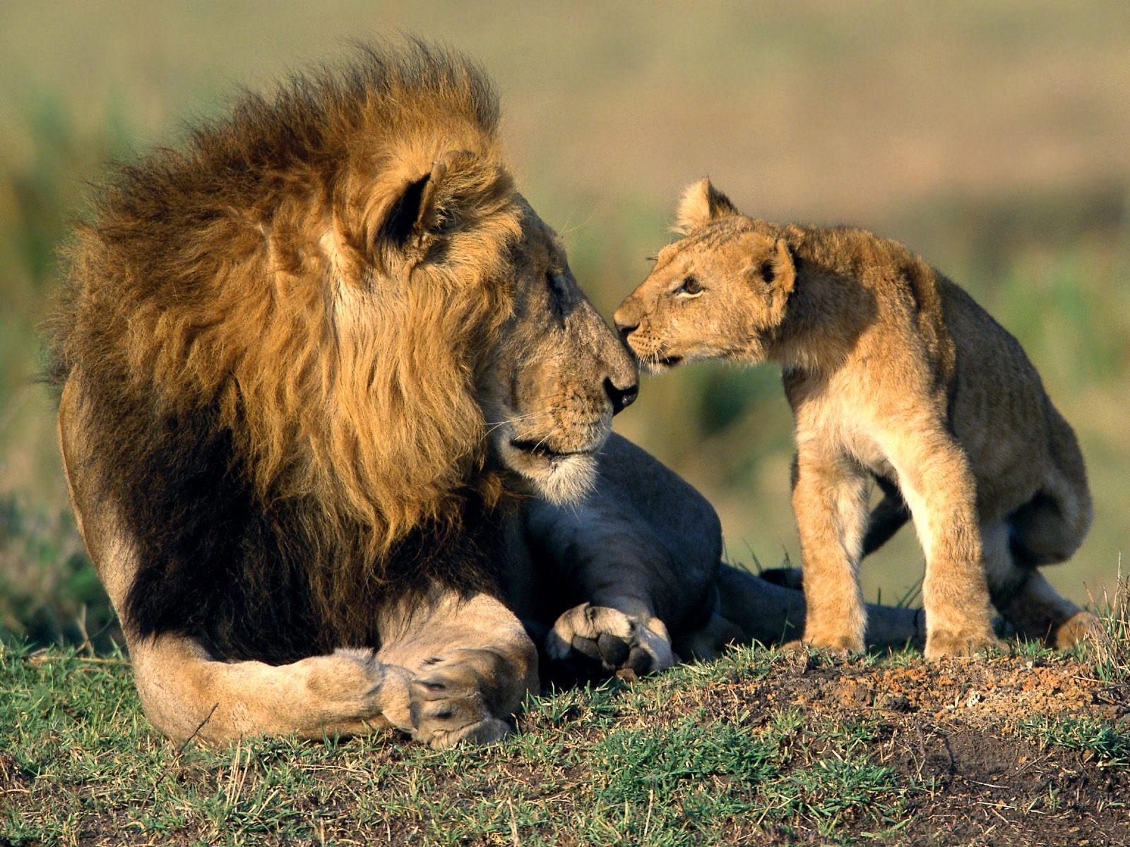 http://1.bp.blogspot.com/-bShDMGhimwE/TcGVBHaUWKI/AAAAAAAAAVo/n9oeIxxXMiM/s1600/200_Animals_Wallpapers.jpg