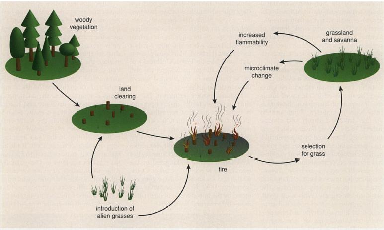 Ecosystem Impacts Of Invasive Species