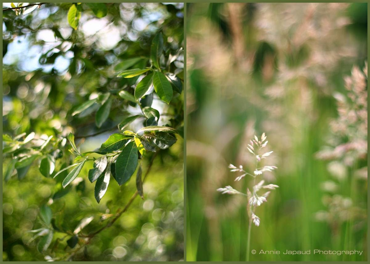 nature collage, summer feeling, green