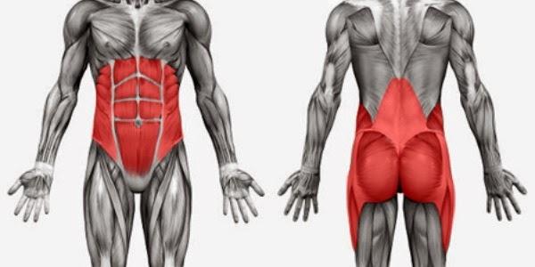Músculos que integran el CORE