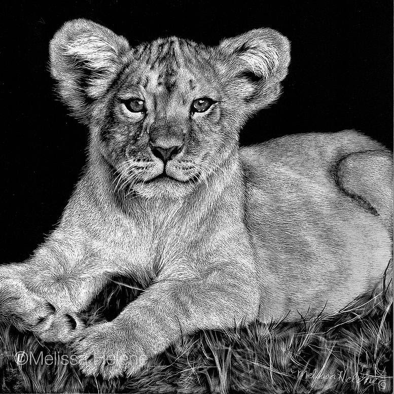 09-Lion-Cub-Melissa-Helene-Amazing-Expressions-in-Scratchboard-Animal-Portraits-www-designstack-co
