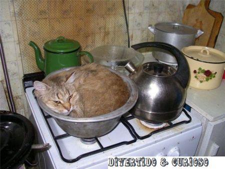 [Image: gato-na-panela-como-fazer-espetinho-de-g...mbnail.jpg]