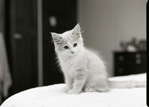 Pictures of Cute kittens